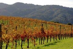 Vineyard on California hill Royalty Free Stock Photos