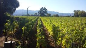 Vineyard 1 Royalty Free Stock Photography