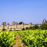 Vineyard, Carcassonne. France. Royalty Free Stock Images