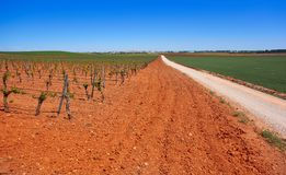 Vineyard in Castile La Mancha of Spain. In Cuenca by Saint James Way of Levante royalty free stock images