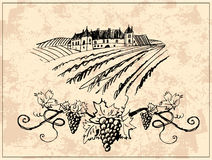 Vineyard and castle Royalty Free Stock Images