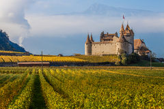 Vineyard and Castle Stock Images