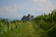 Vineyard and Castle. Near Parma, Italy Royalty Free Stock Image
