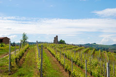 Vineyard with Castle Stock Photo