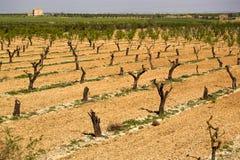 Vineyard. Royalty Free Stock Image