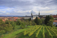 Vineyard and cathedral in Bamberg Stock Photo