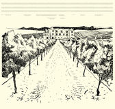 Vineyard with chateau in background Royalty Free Stock Photos