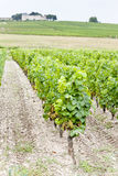 Vineyard and Chateau d'Yquem Stock Image