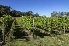 Vineyard at Chateau de Monbazillac - Dordogne - France stock photography