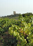 Vineyard at Chateaueuf Royalty Free Stock Images