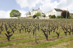 Vineyard. Chenonceau. France Royalty Free Stock Photos