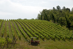 Vineyard in the Chianti. Tractor with farmer in vineyard stock photography