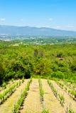 Vineyard in the Chianti royalty free stock photos