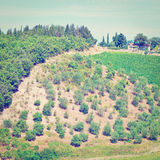 Vineyard in Chianti. Hill of Tuscany with Vineyard in the Chianti Region, Instagram Effect stock photo