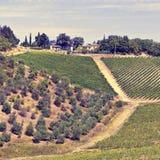Vineyard in Chianti Royalty Free Stock Photo