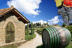 Vineyard in Chianti, Italy. Vineyard in Chianti, Tuscany, Italy, famous landscape royalty free stock image