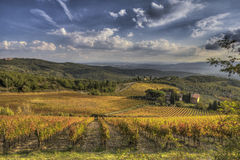 Vineyard of Chianti. Vineyard in Chianti, near Castellina, almost sunset time Royalty Free Stock Photo
