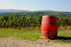 Vineyard in Chianti with red wine barrels, Tuscany region. Vneyard in Chianti in Tuscany, Italy Royalty Free Stock Image