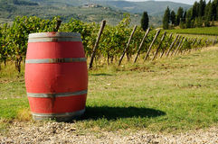 Vineyard in Chianti with red wine barrels, Tuscany region. Vneyard in Chianti in Tuscany, Italy Royalty Free Stock Images