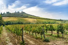 Vineyard in Chianti region in province of Siena. Tuscany. Italy. Vineyard in Chianti region in province of Siena. Tuscany landscape. Italy royalty free stock photography