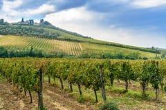Vineyard in Chianti region in province of Siena. Tuscany. Italy. Vineyard in Chianti region in province of Siena. Tuscany landscape. Italy stock photos