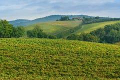 Vineyard in Chianti region in province of Siena. Tuscany. Italy. Vineyard in Chianti region in province of Siena. Tuscany landscape. Italy royalty free stock photo