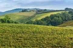 Vineyard in Chianti region in province of Siena. Tuscany. Italy. Vineyard in Chianti region in province of Siena. Tuscany landscape. Italy royalty free stock photos