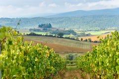 Vineyard in Chianti region in province of Siena. Tuscany. Italy. Vineyard in Chianti region in province of Siena. Tuscany landscape. Italy royalty free stock image