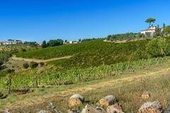 Vineyard in Chianti region. Tuscany. Italy. Vineyard in Chianti region. Tuscany landscape. Italy royalty free stock photos