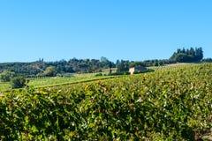 Vineyard in Chianti region. Tuscany. Italy. Vineyard in Chianti region. Tuscany landscape. Italy stock photos