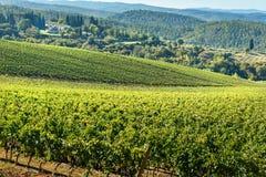 Vineyard in Chianti region. Tuscany. Italy. Vineyard in Chianti region. Tuscany landscape. Italy stock photo
