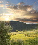 Vineyard in Chianti, Tuscany. Chianti vineyard landscape against sunset in Tuscany, Italy stock photo