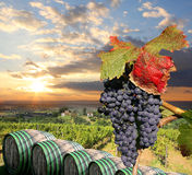 Vineyard in Chianti, Tuscany. Chianti vineyard landscape in Tuscany, Italy stock images