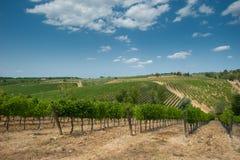 Vineyard in Chianti, Tuscany. Green vineyard in Chianti, Tuscany royalty free stock photo