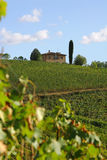 Vineyard chianti, Tuscany, Italy. Beautiful vineyard, typical in Tuscany, region Chianti royalty free stock photography