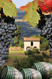 Vineyard in Chianti, Tuscany, Italy. Famous landscape stock images