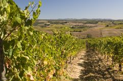 A vineyard in Chianti  Tuscany, Italy Stock Photos