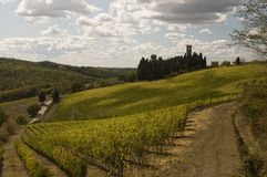 A vineyard in Chianti  Tuscany, Italy Royalty Free Stock Photos