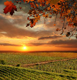 Vineyard in Chianti, Tuscany Stock Photos
