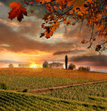 Vineyard in Chianti, Tuscany Royalty Free Stock Photos