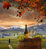 Vineyard in Chianti, Tuscany Royalty Free Stock Photography