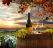 Vineyard in Chianti, Tuscany. White wine with barrel on vineyard in Chianti, Tuscany, Italy stock photography