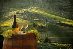 Vineyard in Chianti, Tuscany. White wine with barrel on vineyard in Chianti, Tuscany, Italy stock image