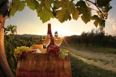 Vineyard in Chianti, Tuscany Stock Photos