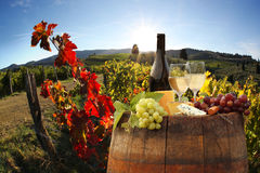 Vineyard in Chianti, Tuscany Stock Photography