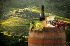 Vineyard in Chianti, Tuscany Stock Images