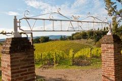 Vineyard chianti. Shine near siena royalty free stock photography
