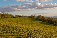 Vineyard chianti. Shine near siena Royalty Free Stock Image