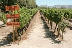 Vineyard of Chile Royalty Free Stock Photos