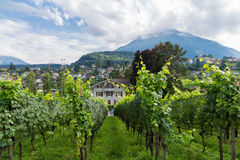 Vineyard, city of Spiez Royalty Free Stock Images